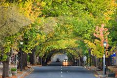 Adelaide Hills Full Day Private Wine Tour